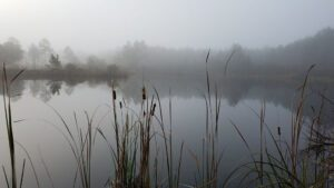 Tates Hell Swamp Restoration Project Office Views - Autumn Cool